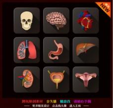 心脑肝肺胃肾膀胱子宫图片
