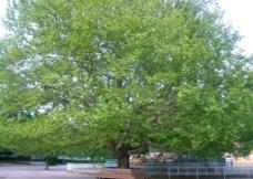 绿色树荫图片