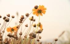 园博园花卉图片