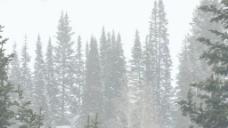 在暴风雪2股票视频画面的松树 视频免费下载