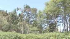 俄勒冈沿岸的树木股票视频 视频免费下载