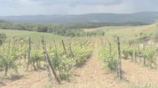 托斯卡纳的葡萄园与赤裸的地股票视频 视频免费下载