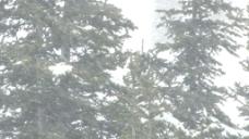 侧身大雪3股票的录像 视频免费下载
