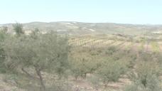 西西里岛葡萄园7股票的录像 视频免费下载