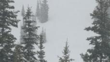山上的暴风雪中的股票视频的松树 视频免费下载
