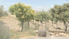 西西里岛酒庄的葡萄园股票视频 视频免费下载