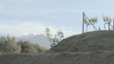 西西里岛的葡萄园与埃特纳火山3股票的录像 视频免费下载