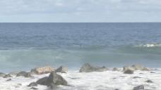 夏威夷冲浪冲浪库存的录像 视频免费下载