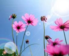 打光的花儿