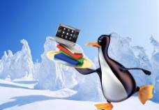 雪中的企鹅图片