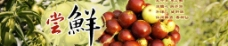 鲜枣宣传海报图图片
