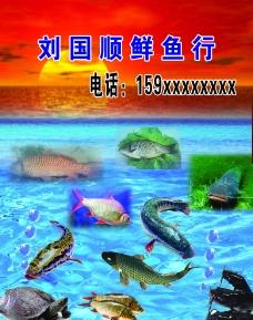 鱼行素材图片