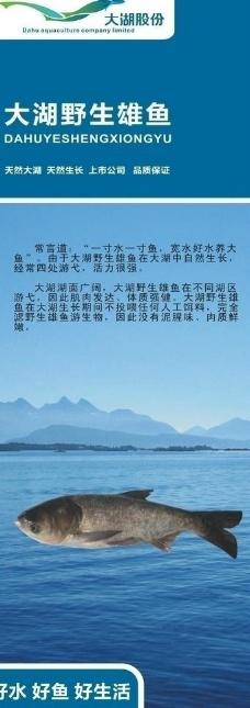 太湖鱼易拉宝图片