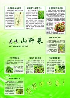 美味山野菜图片