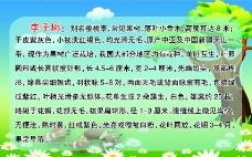李子树图片