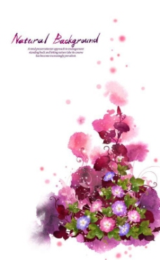 艳丽粉色牵牛花PSD图片素材