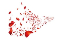 红色玫瑰花瓣背景PSD设计素
