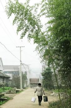 绿竹下的生活图片