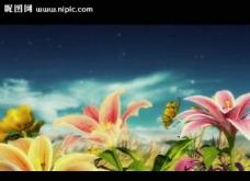 百合花婚礼背景视频