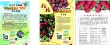 杨梅宣传单图片