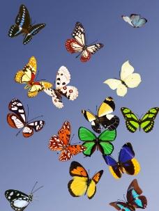 蝴蝶合集图片