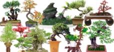 盆景素材图片