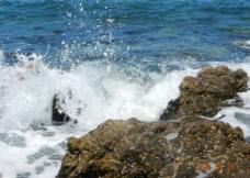 南海焦石图片