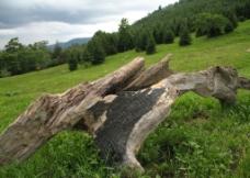 枯树造型图片
