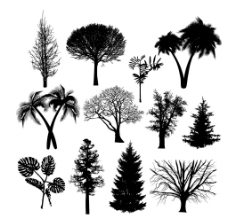 树剪影图片
