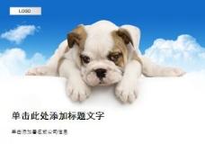 小狗ppt模板
