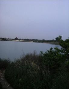 芦苇湖图片