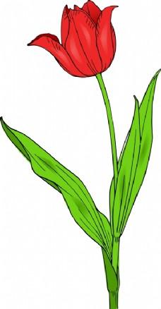 彩色的郁金香
