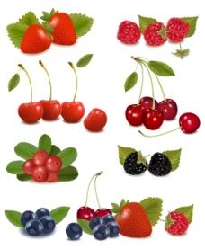 美味的水果01矢量