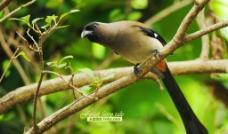 鸟儿摄影图片