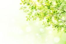 绿色叶光晕背景矢量01