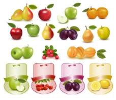 水果图片01矢量素材