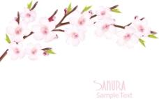 美丽的樱花背景矢量图形01