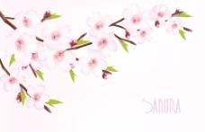 美丽的樱花背景矢量图形02