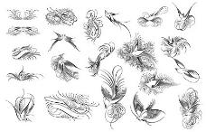 鸟,鸟,花,黑色和白色,和材料