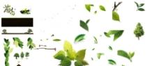 茶树 叶子 绿色 花边图片