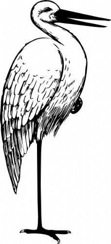鸟类动物0268