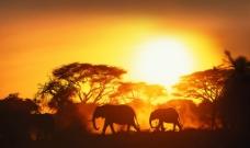 非洲草原黄昏图片