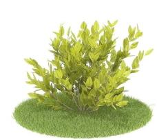植物国外精品素材装饰素材免费下载装修素材免费下载 79