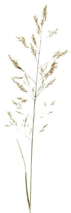 树叶,植物3d材质贴图素材10