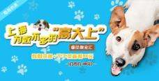 宠物banner