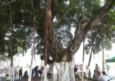 厦门旅游景观图片