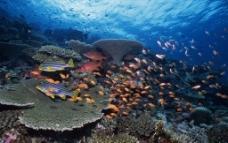 海底鱼群图片