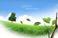 高清绿色概念草坪树枝素材