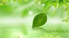 高清绿色概念树叶素材