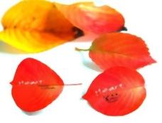 秋天红色落叶系列PSD 3